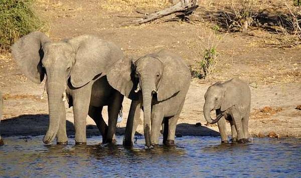 Botswana Reisebericht und Länderinformationen