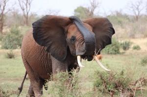 Kenia-Reisebericht