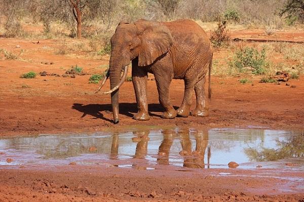Reisebericht – Kenia Rundreise vom 15. bis 24. Juni 2013