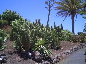 Kakteenpark-Fuerteventura