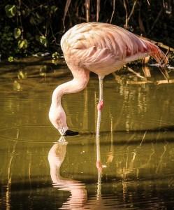 Flamingo-Naturerlebnisse-Mexiko