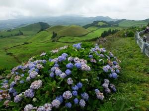 Blütenpracht auf den Azoren